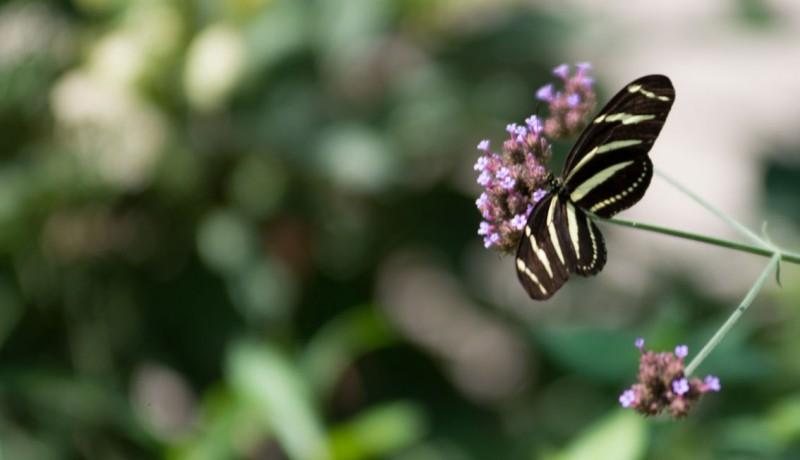 butterfly-bokeh